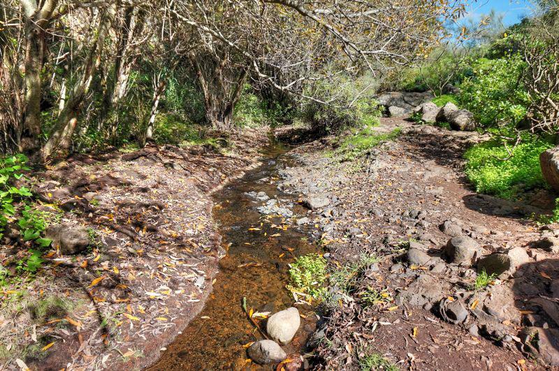 Der Wanderweg führt am Bach entlang