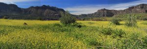 Geführte Wanderungen, Tageswanderungen auf Gran Canaria