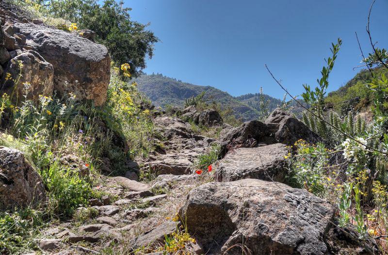 Wir wandern bergauf auf guten Wegen durch das Guayadeque Tal