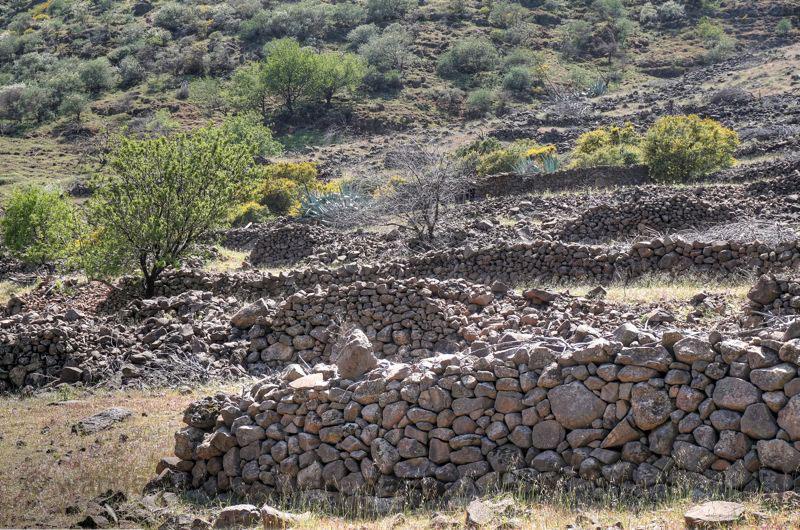 Aufgelassene Terrassenfelder im Südosten von Gran Canaria, Barranco de Guayadeque