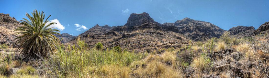 Palmen und spanisches Rohr im Barrancogrund im Westen von Gran Canaria