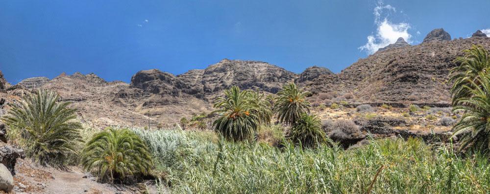 Kanarische Dattelpalmen und Schilfrohr mit den Felswänden des Guiguimassives im Hintergrund