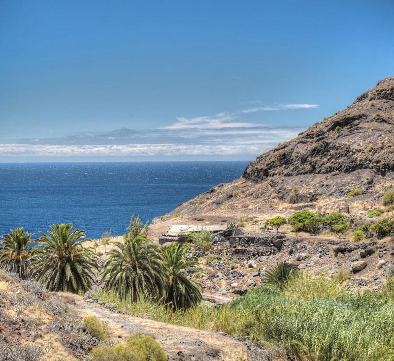 Palmen und spanisches Rohr im Talgrund oberhalb des Guigui Strandes mit Blick nach Teneriffa und den Teide