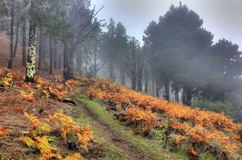 Herbststimmung mit gelb orangen Farn bei einer Wandertour im Norden von Gran Canaria im November