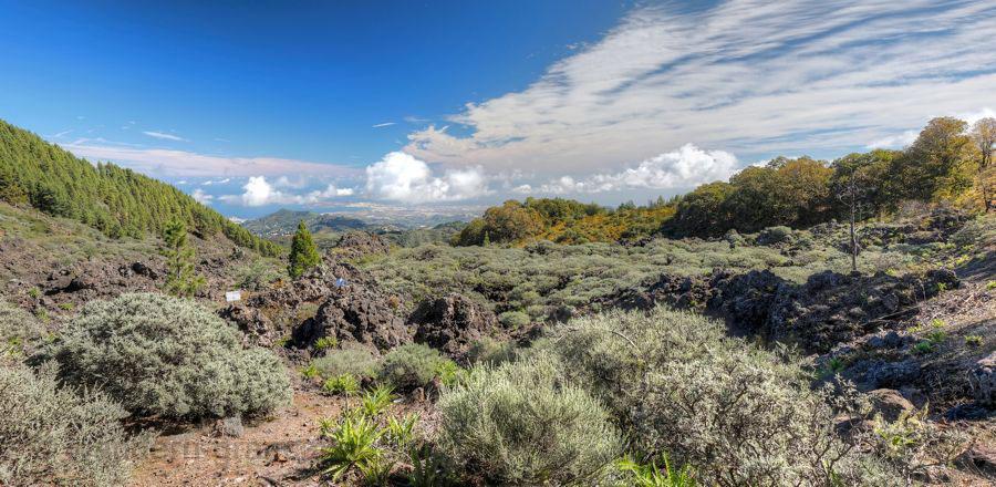 Lavafluss mit Ginster überwachsen bei einer Wanderung im Norden von Gran Canaria, im Hintergrund Las Palmas