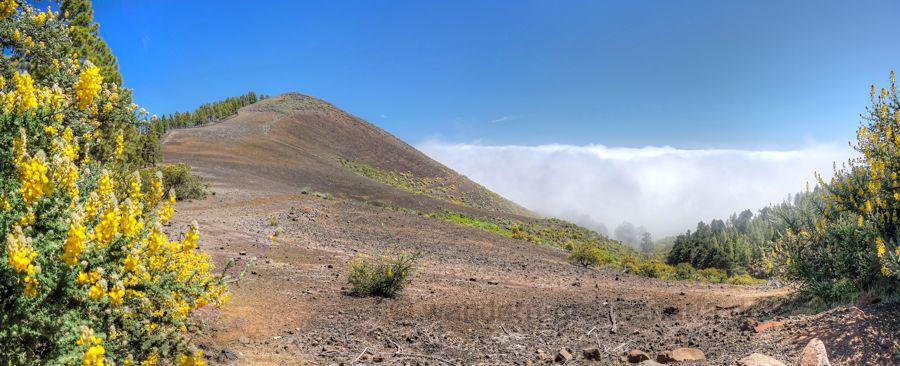 Vulkankegel Montañon Negro mit gelben Ginster, Gran Canaria Nordseite