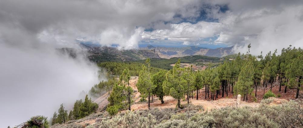 Kanarische Kiefern mit Wolken auf der Wanderung zum Pico de las Nieves