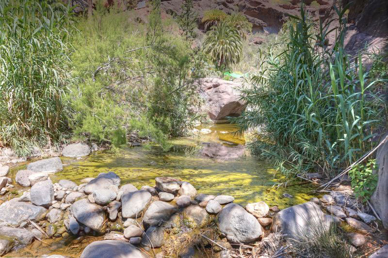 Dichte Vegetation und Bach im Talgrund von Santa Lucia