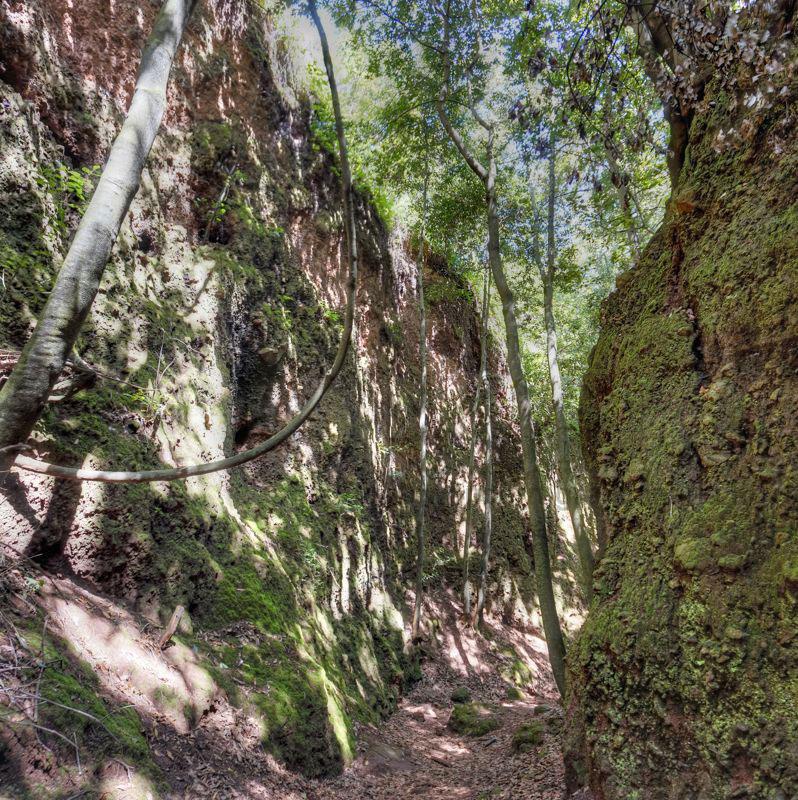 Canyon mit grossen Lorbeerbäumen im Nordosten von Gran Canaria