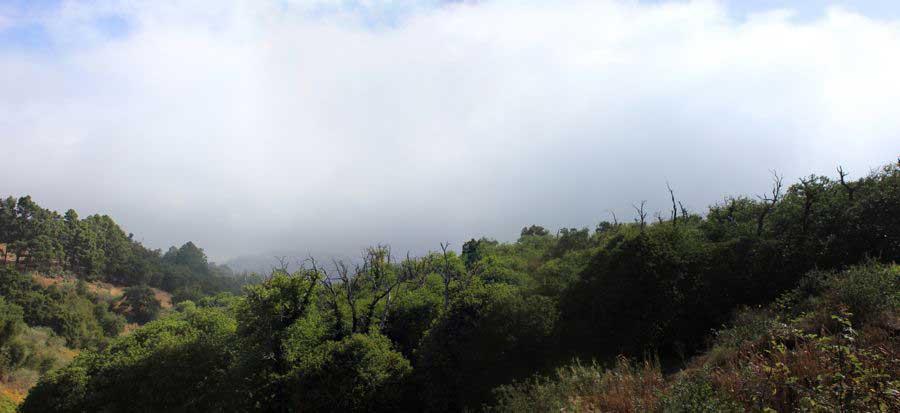 Kastanienhain oberhalb von Teror in Wolken