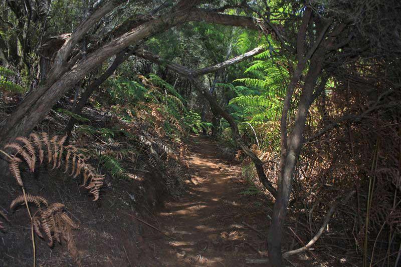 Die Wanderung führt durch den dichten Fayal Brezal Wald im Norden von Gran Canaria