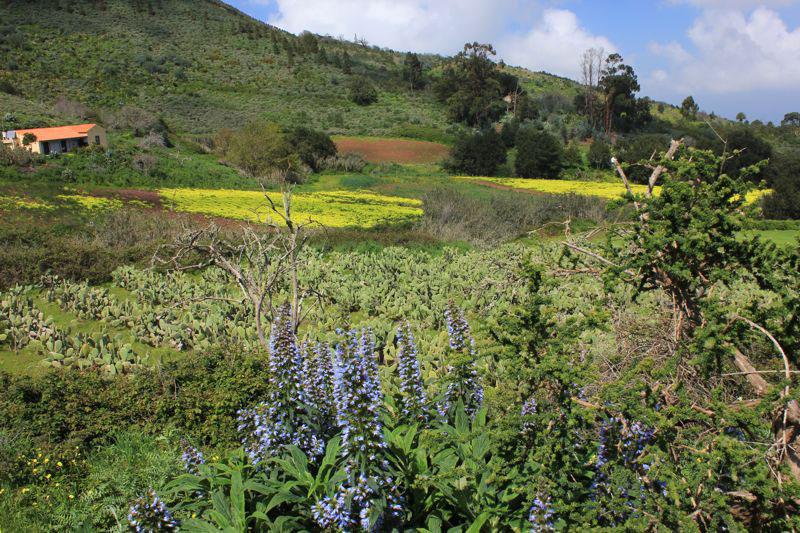 Blau blühender Natternkopf und gelbe Kleewiese auf der Wanderung beim Osorio
