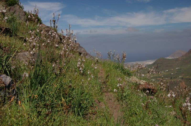 Wanderpfad am Hang oberhalb vom Tal von Agaete