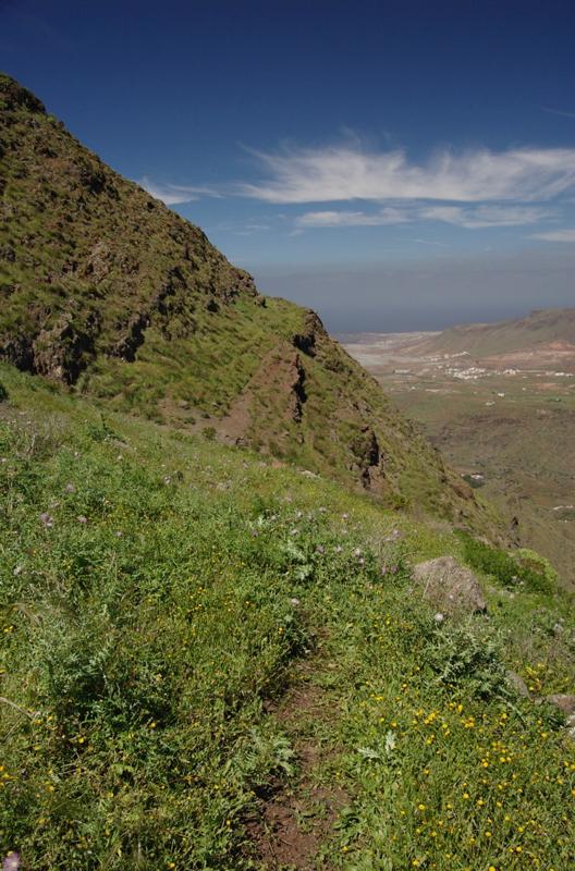 Schmaler Wanderpfad durch grüne Steilhänge in Richtung Puerto de las Nieves, Agaete