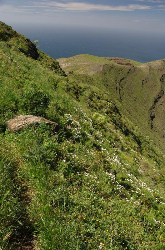 Steiler Wiesenhang oberhalb vom Tal von Agaete mit schmalem Wanderpfad