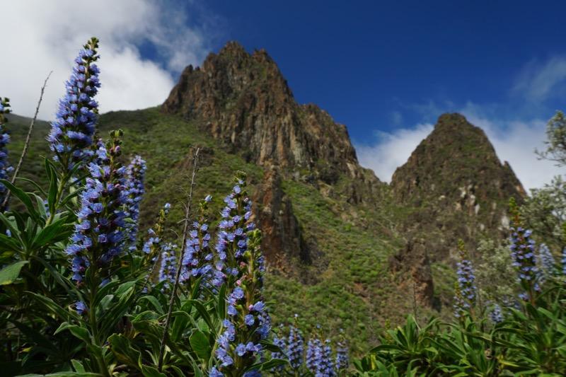 Tiefblaue Natternkopfblühten vor den Vulkandomen oberhalb von Valsequillo
