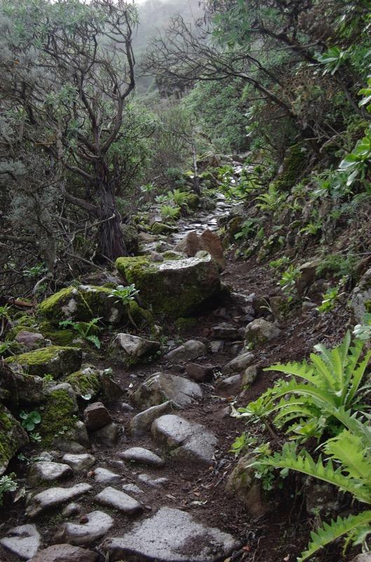 Feuchter Stein gepflasterter Königsweg auf der Natternkopfwanderung