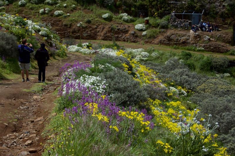 Bunter Blumengarten, Wandern im Nordosten von Gran Canaria