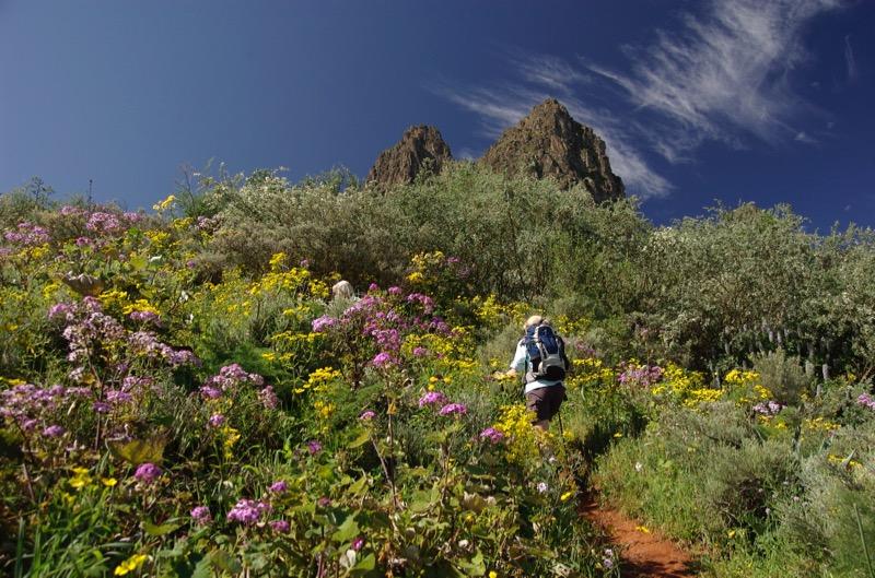 Blühende Hänge neben dem Wanderweg, Gran Canaria Frühjahr