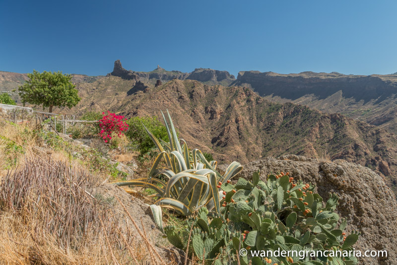 Feigenkaktus, Boucanville und trockene Barrancos im Zentrum von Gran Canaria