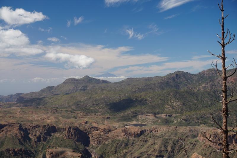 Blick über die lichten Kiefernwälder im Westen von Gran Canaria, im Hintergrund der Teide auf Teneriffa