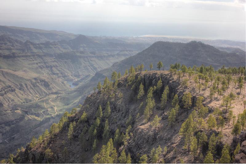 Ausblick über die lichten Kiefernwälder im Süden von Gran Canaria zu den Stauseen von Ayagaures