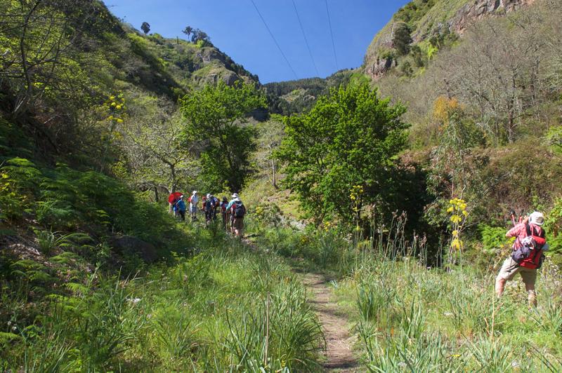 Wanderweg durch das grüne Tal im Norden von Gran Canaria