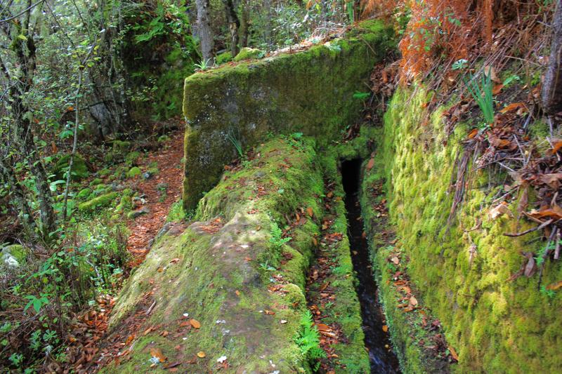 Grünes Moos an einer Wasserleitung bei einer Wanderung im Norden von Gran Canaria