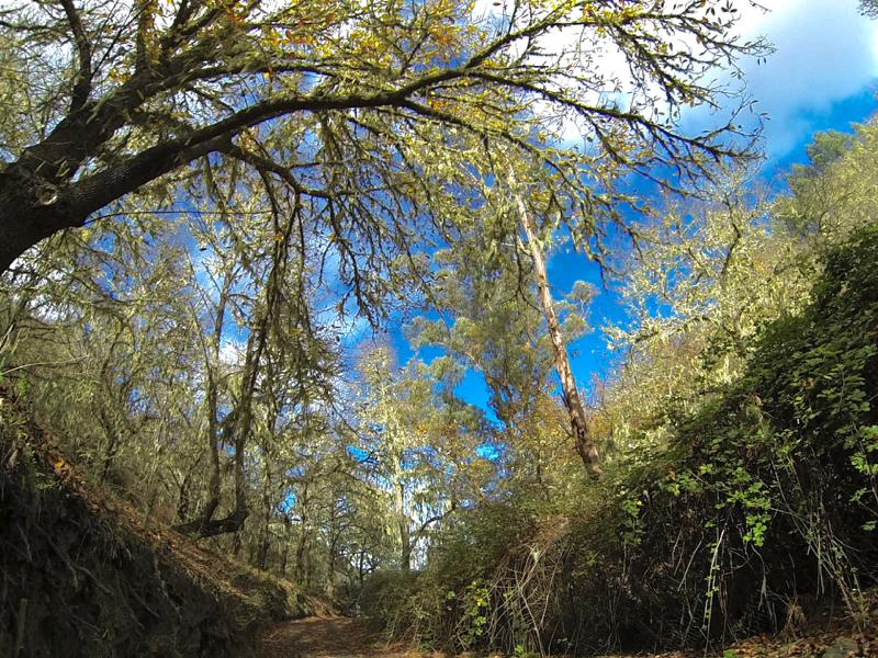 Kastanienhaine im oberen Teil der Valsendero Rundwanderung
