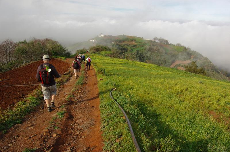 Grüne Kulturlandschaft mit roter, fruchtbarer Erde im Norden von Gran Canaria