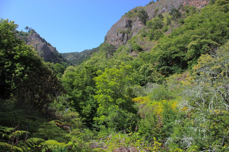 Grüne Kastanien oberhalb von Valsendero