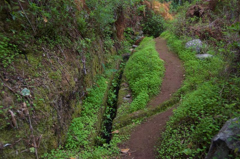 Grüner Sauerklee an einer Wasserleitung, Levada, Gran Canaria