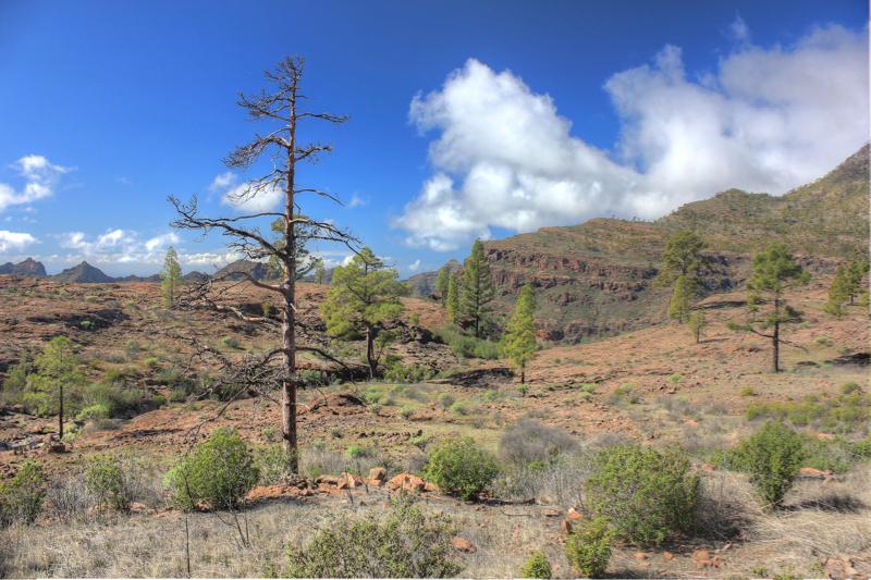 Trocken felsige Hochfläche mit Kanarischen Kiefer, Gran Canaria