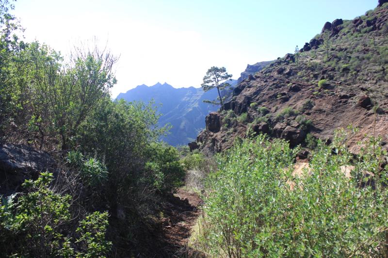 Wanderweg durch eher dichtes Gebüsch im Südwesten von Gran Canaria