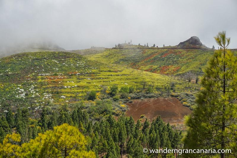 Bunt blühende Flächen im Frühjahr auf Gran Canaria