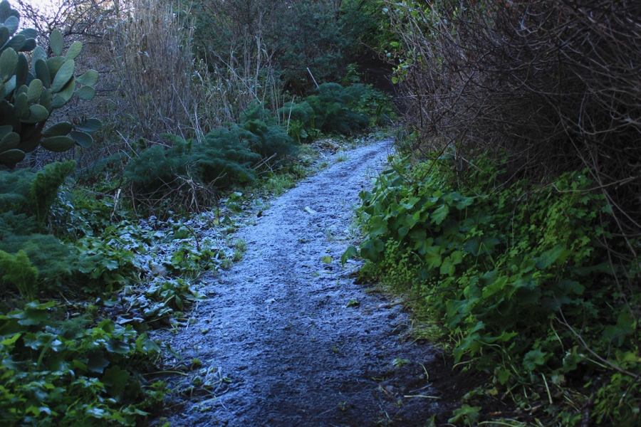 Bodenfrost am Morgen auf einem Wanderweg in der Falkenschlucht