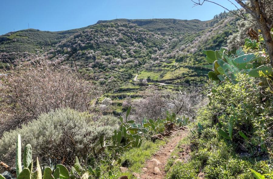 Wanderpfad im blühenden Nordosten von Gran Canaria mit Mandelbäumen im Hintergrund.